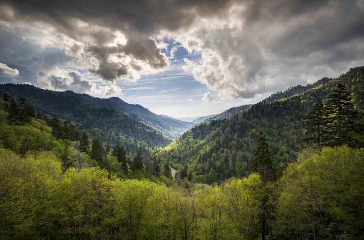 Smoky Mountain Spring II